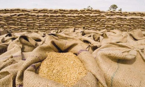 Editorial: The govt's poor management and lack of coordination led to the wheat crisis
