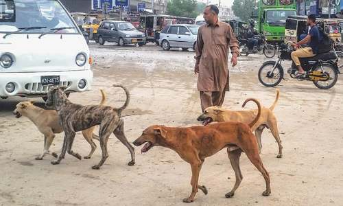 Sindh govt finalises Rs1bn plan to fight rabies, stray dogs