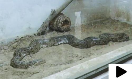 لاہور کے سفاری زو میں سانپ گھر
