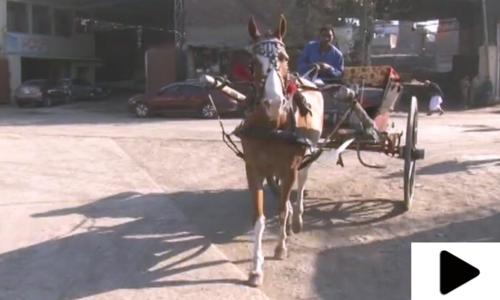 ماضی کی شاہی سواری تانگے کا استعمال متروک