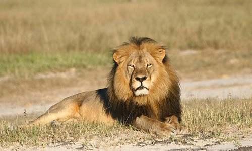 لاہور کے سفاری پارک میں 'شیر کا حملہ'، نوجوان ہلاک