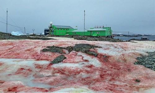 انٹارکٹیکا کے جزیرے میں 'خونی برف' سے سائنسدان دنگ