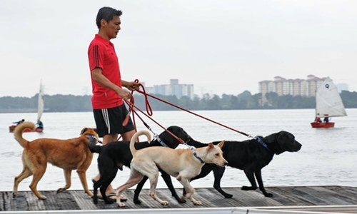 Pet dog infected with COVID-19 in Hong Kong