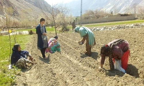 One woman's dream fuelled Gilgit Baltistan's flower industry