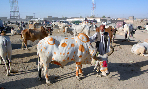 Punjab allows opening of cattle markets