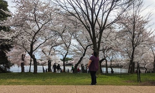 Cherry blossoms and empty streets: A stroll across Washington DC under quarantine