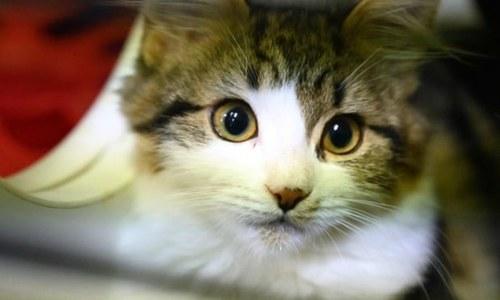 کتے، بلیاں اور بطخیں بھی کورونا کا شکار بن سکتی ہیں، تحقیق