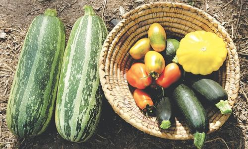 GARDENING: SALAD DAYS ARE HERE AGAIN