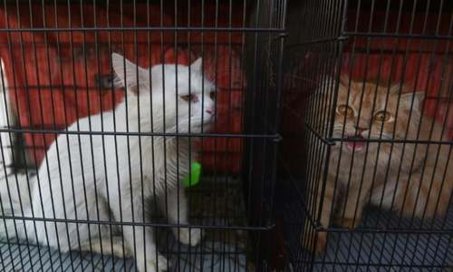 Hundreds of lockdown-hit animals die at Pakistan pet markets