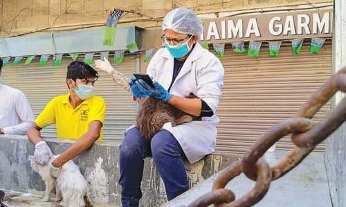 Hundreds of animals die after being abandoned in Empress Market
