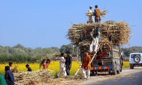 Pakistan is abandoning cotton for water guzzling sugarcane