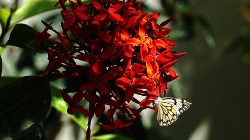Finding beauty in your backyard