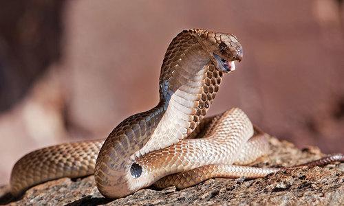 بھارت: شوہر پر سانپ کے ذریعے بیوی کو قتل کرنے کا الزام