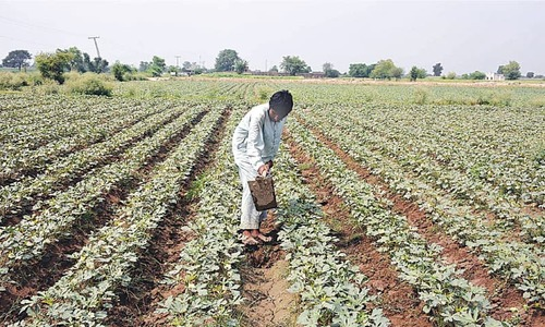 Centre to collaborate with provinces for agri package implementation