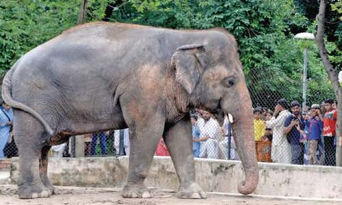 Committee to decide on relocation of Kavaan, other animals from zoo