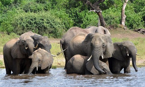 Botswana reports mysterious deaths of hundreds of elephants