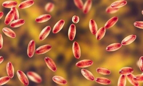 چین میں گلٹی دار طاعون کے کیس کی تصدیق