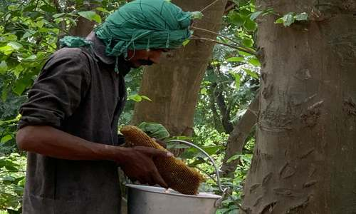Pakistan's tree-planting drive has a sweetener: more honey