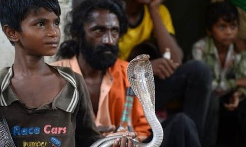 بھارت: سانپ کے کاٹنے سے 20 برس میں 12 لاکھ افراد ہلاک
