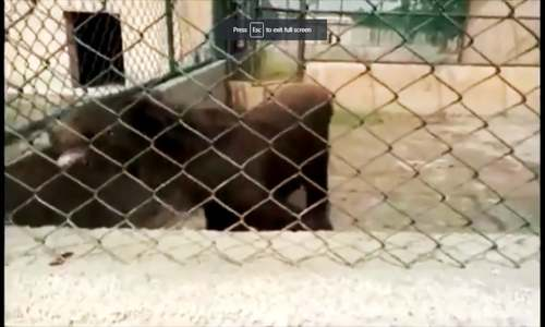 Concerns pour in after private zoo bear's video goes viral