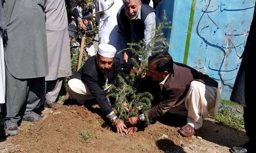 'Plant for Pakistan' campaign launched in several KP districts
