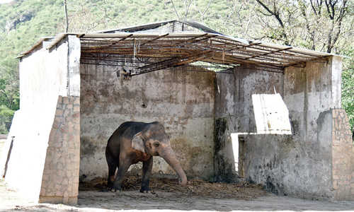 Home of a wild animal is its natural habitat, IHC's detailed order says