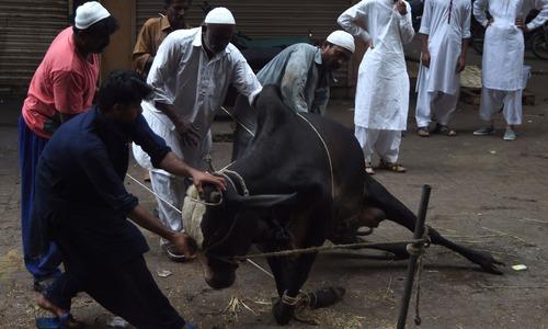 جانور خریدنے جیسا اہتمام اگر ہم قربانی کے وقت بھی کرلیں تو کتنا اچھا ہو