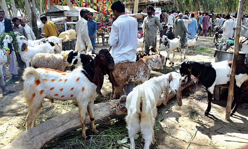 Probe into award of Mawach Goth cattle market contract ordered