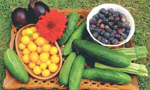 'وہ بھی کیا دن تھے جب بارش کے بعد ہم کراچی کے باغات سے پھل اور سبزیاں لاتے تھے'