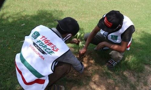 ٹائیگر فورس ڈے پر ملک بھر میں شجر کاری مہم کا آغاز