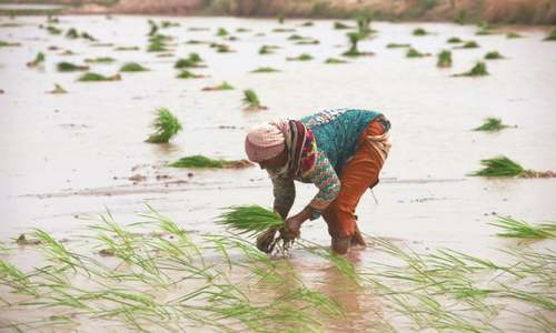 Rice exports need more attention