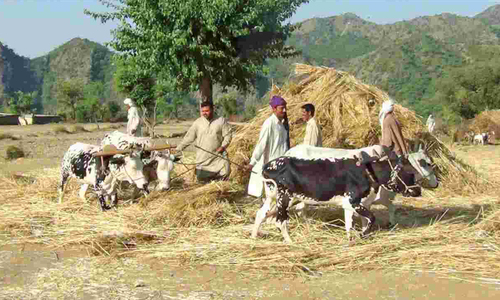 Mark-up subsidy scheme launched for farm sector