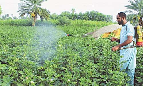 Rabi crops production targets set