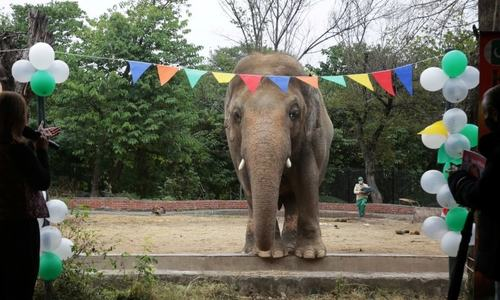 Kaavan the elephant serenaded one last time at farewell party