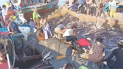 Biggest catch in three decades brings joy to Thatta fishermen