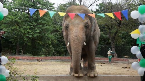 'ہاتھی میرا ساتھی' نہ رہا