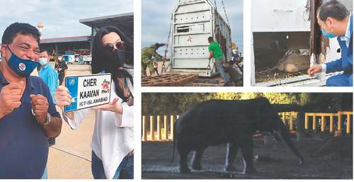 Kaavan arrives in Cambodia to start new life