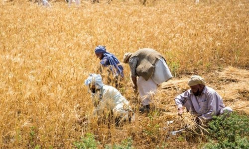 Low earnings and agricultural neglect push Pakistan into food insecurity