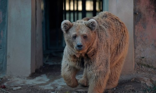Islamabad's only zoo shuts after last animals moved