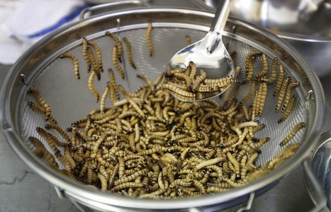 Cafe, croissant ... worms? EU agency says worms safe to eat
