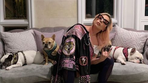 Lady Gaga's two abducted bulldogs returned unharmed