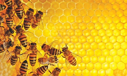 Helping bees to help us: Explaining Pakistan's initiative of planting bee flora