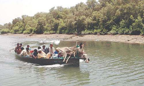 Saving Sindh's mangroves