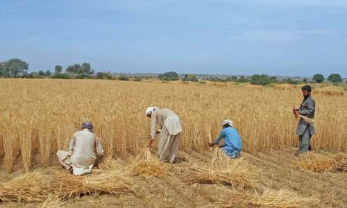 Rawalpindi's interlopers on agricultural lands