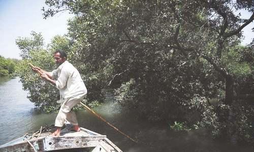 جنگلات کے تحفظ کے لیے ماہی گیر حکومت سے زیادہ این جی اوز پر اعتماد کیوں کرتے ہیں؟