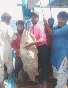 Lady luck smiles on Balochistan's fisherman