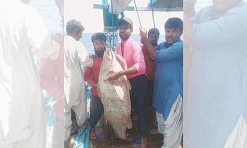 بلوچستان میں پکڑی گئی قیمتی مچھلی 72 لاکھ روپے میں فروخت
