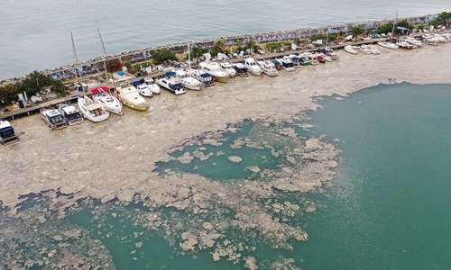 'Sea snot' on Turkey's shores alarms experts