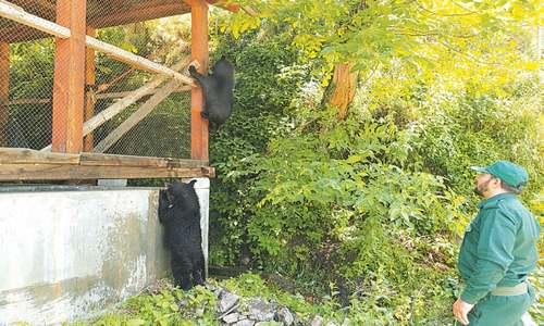 SITUATIONER: Kashmir losing its hidden treasure