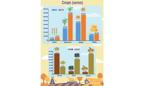 The rise of the water-guzzling crop